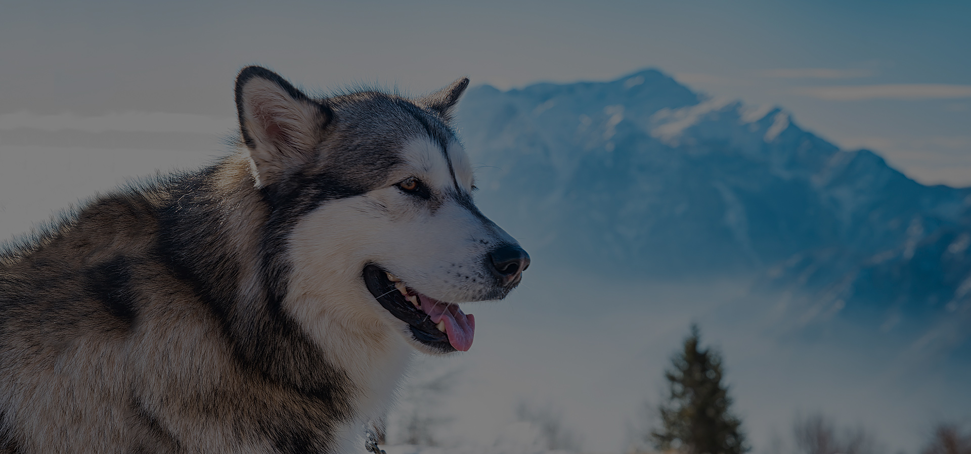 The Alaska State <br>Veterinary Medical Association